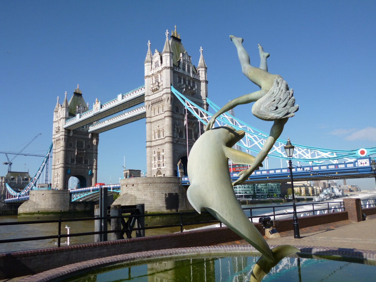 Dolphin at play Tower Bridge London